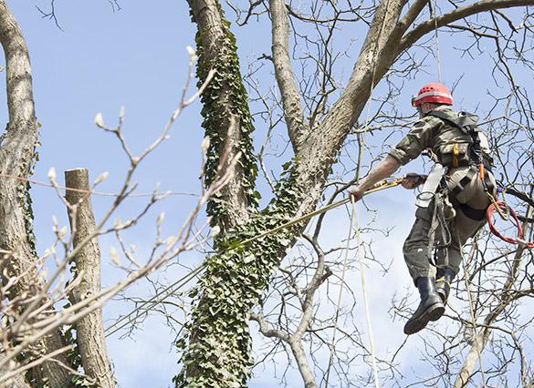 Tree Service Experts Louisville