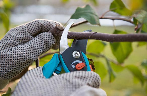 Tree Service Experts Murrieta