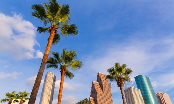 Do_palm_trees_grow_in_Houst