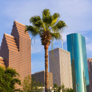 Palm Trees Houston Proper Care And Maintenance