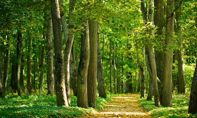 Arlington_Tree_Diseases