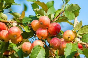 Best Fruit Trees That Grow In Dallas Texas