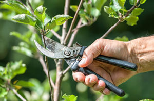 When It's The Right Time For Tree Pruning In Houston