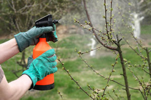 The Most Common Tree Diseases And Pests In Fort Worth