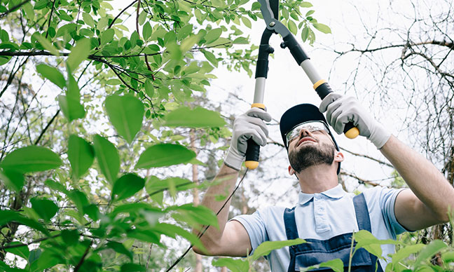 When_It_s_The_Right_Time_For_Tree_Prunning_In_Houston