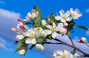 Best Flowering Trees For Austin