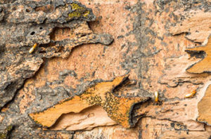 How To Get Rid Of Termites In Trees In Fort Worth