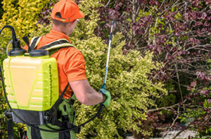 How To Choose Tree Nutrients For Frisco Trees