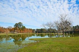 10 Best Trees For Lubbock TX