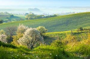 5 Flowering Trees For Lewisville