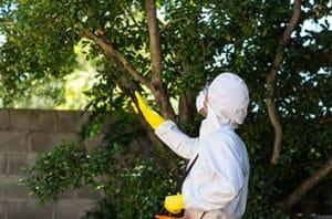 5 Keller Tree Pests and Diseases