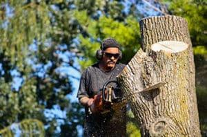 5 Lewisville Tree Diseases And Pests