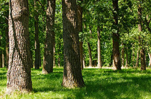 5 Shade Trees For Lewisville
