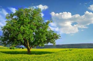 6 Native Trees For Amarillo