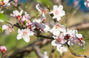 Best Fruit And Nut Trees For Baytown