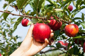 Best Fruit Trees For Abilene