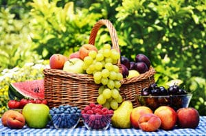 How To Get The Best From Sugar Land Annual Fruit Tree Sale