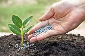 How To Properly Fertilize Trees In Keller