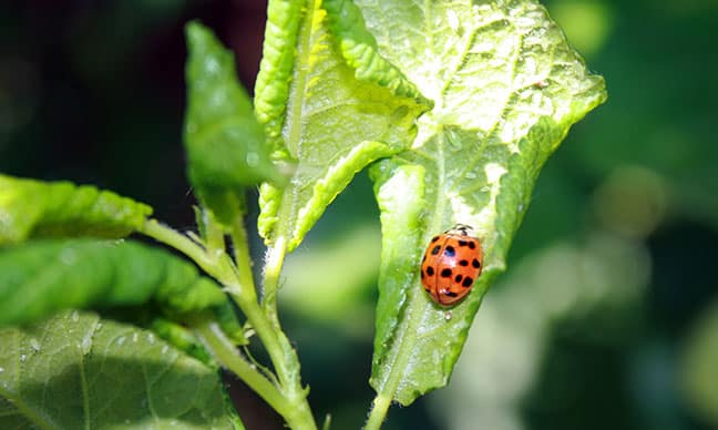 How_do_I_get_rid_of_bugs_eating_my_plants_