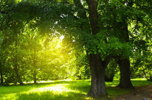 Most Common Amarillo Tree Pests And Diseases