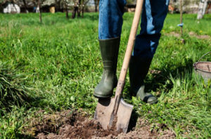 Best Trees To Plant In Bakersfield