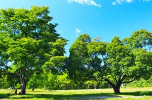 Best Trees For Bay City