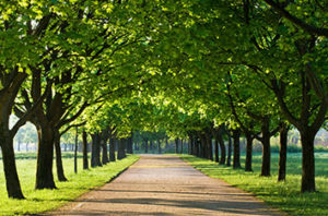 Best Trees For Baytown