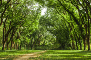 Trees Not Recommended For Brownwood, Central Texas