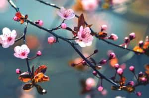 Best Flowering Trees In Sacramento