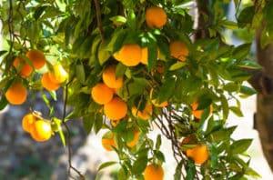 California Citrus State Historic Park - How To Visit