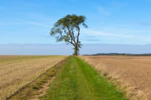 Modesto Ash Tree - Detailed Guide