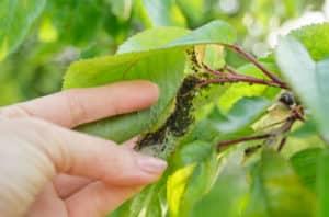 Most Common Austin Tree Diseases