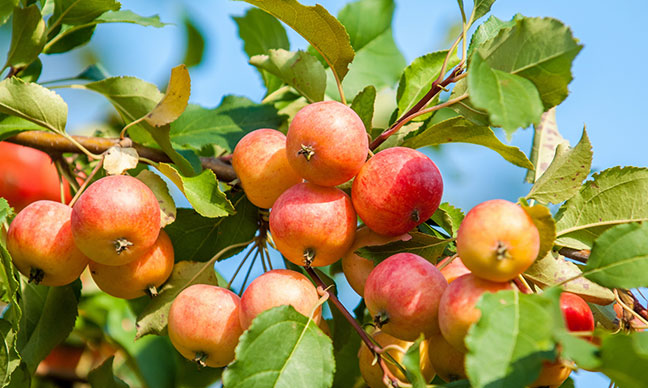 What_are_the_best_fruit_trees_to_grow_in_Southern_California_