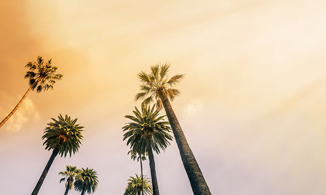 What_kind_of_palm_trees_are_in_Los_Angeles_