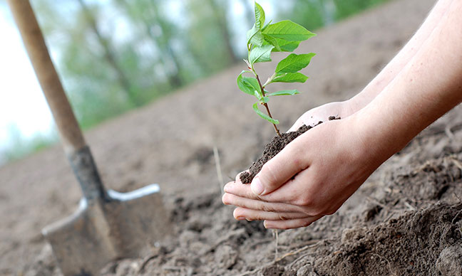 What_small_trees_can_be_planted_close_to_a_house_