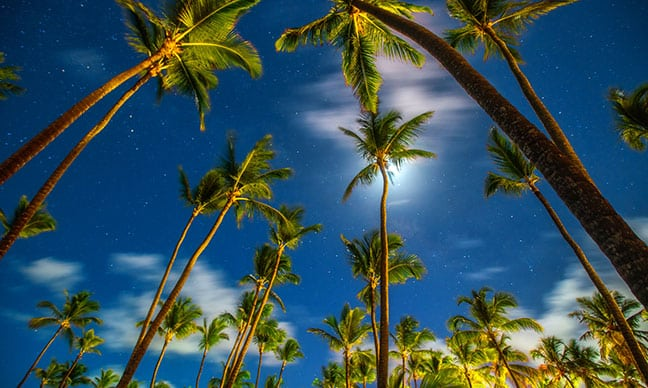 How_do_you_treat_palm_tree_fungus_
