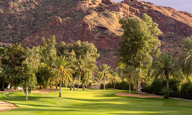 What_trees_grow_well_in_Arizona_