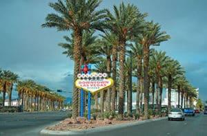 10 Best Las Vegas Trees
