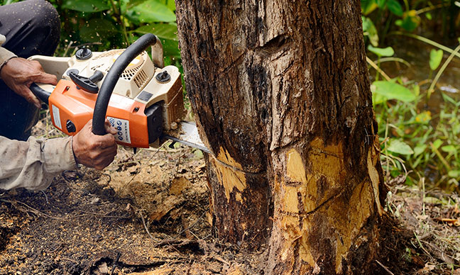 Do_I_need_a_permit_to_cut_down_a_tree_in_Portland_OR_