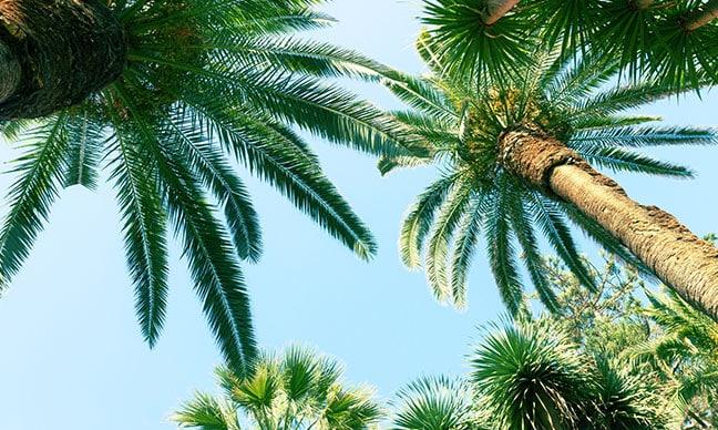 How_do_you_take_care_of_a_palm_plant_