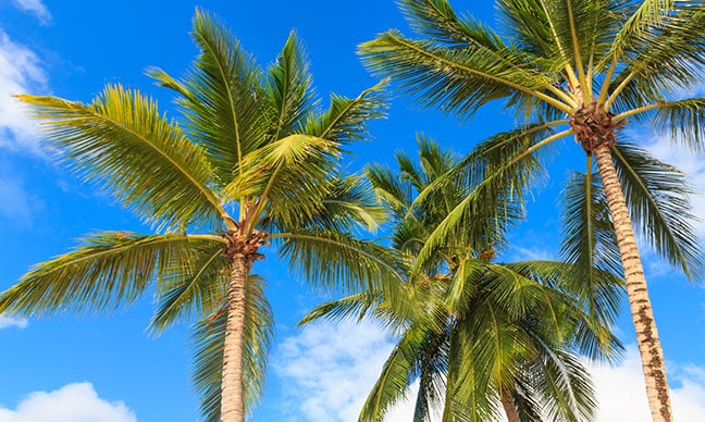 How_much_does_it_cost_to_trim_a_palm_tree_