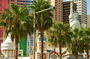 Types Of Palm Trees Las Vegas