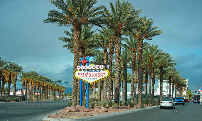 What_kind_of_palm_trees_grow_in_Las_Vegas_